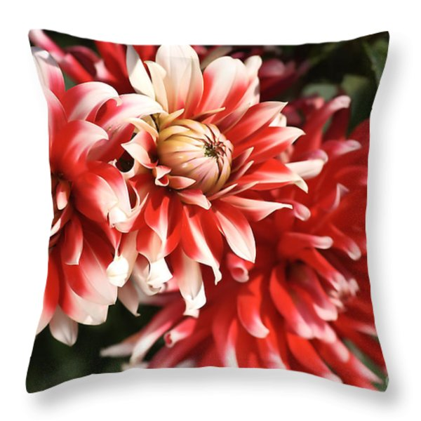 Flower-dahlia-red-white-trio Throw Pillow by Joy Watson