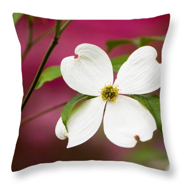 Flowering Dogwood Blossoms Throw Pillow by Oscar Gutierrez