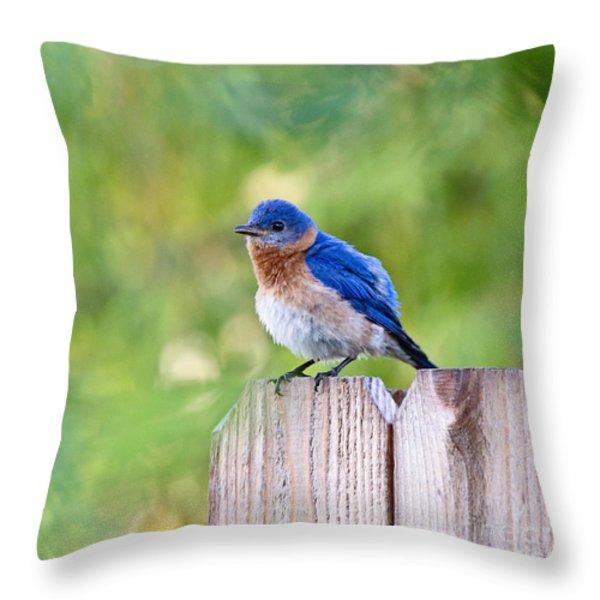 Fluffed Up Throw Pillow by Scott Pellegrin