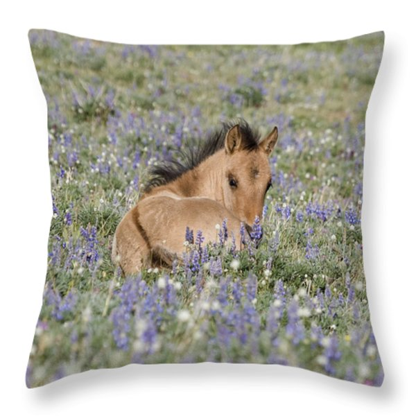 Foal in the Lupine Throw Pillow by Carol Walker