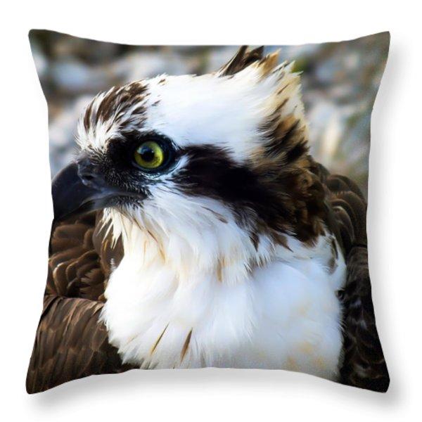 Focused Throw Pillow by Karen Wiles