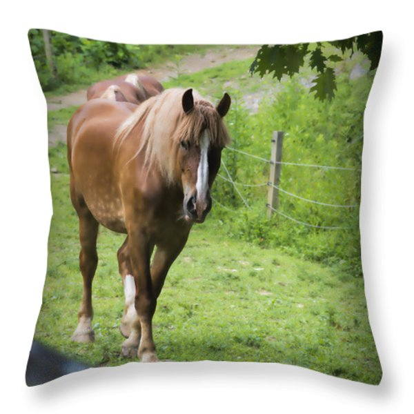 Follow Me Throw Pillow by Dan Friend