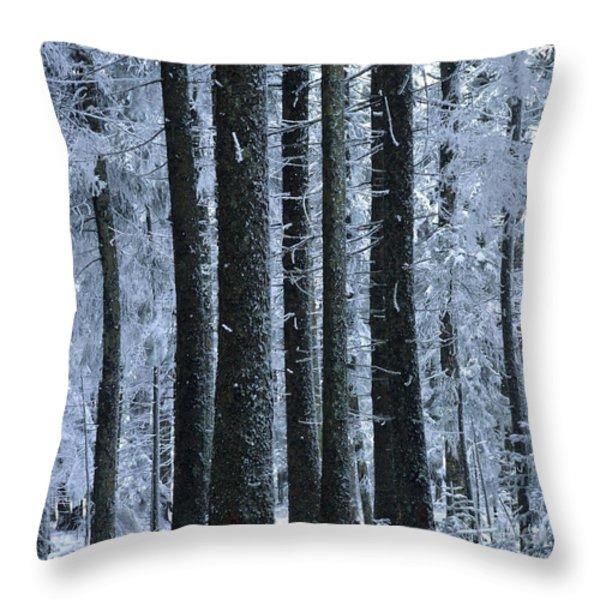 Forest in winter Throw Pillow by BERNARD JAUBERT