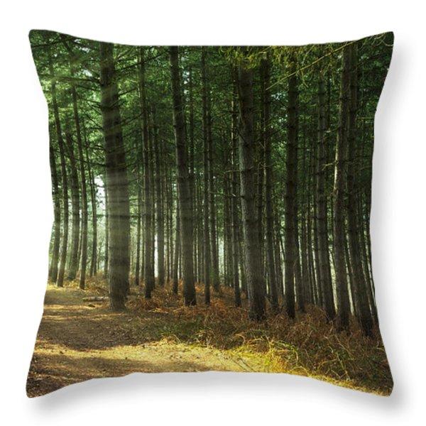 Forest Sun Rays Throw Pillow by Svetlana Sewell
