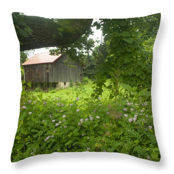 Framed in green Throw Pillow by Paul W Faust -  Impressions of Light