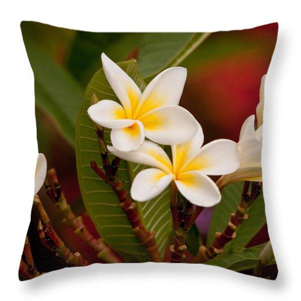 Frangipani - Plumeria Throw Pillow by Michelle Wrighton
