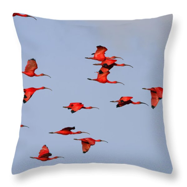 Frankly Scarlet Throw Pillow by Tony Beck