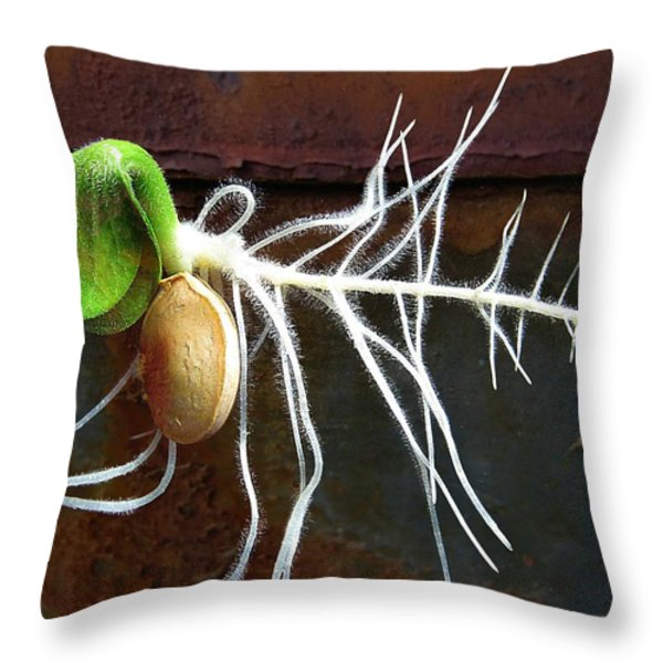 Free to Be Throw Pillow by Shirley Sirois