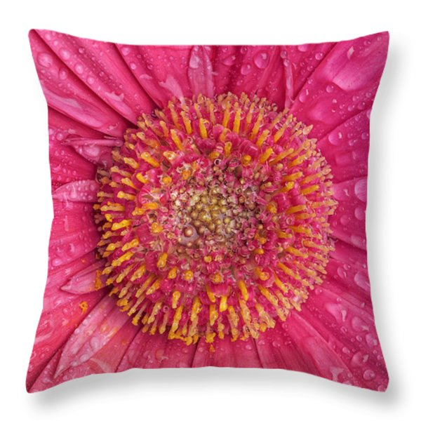 Fresh As A Daisy Throw Pillow by Diane Diederich