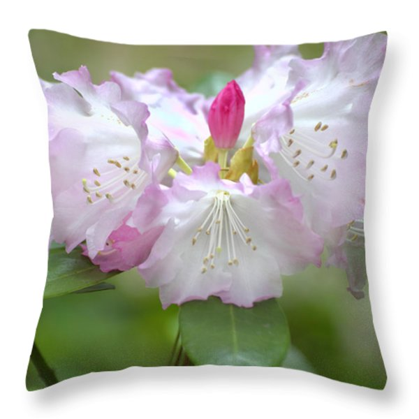 Frilly Pinks Throw Pillow by Diego Re