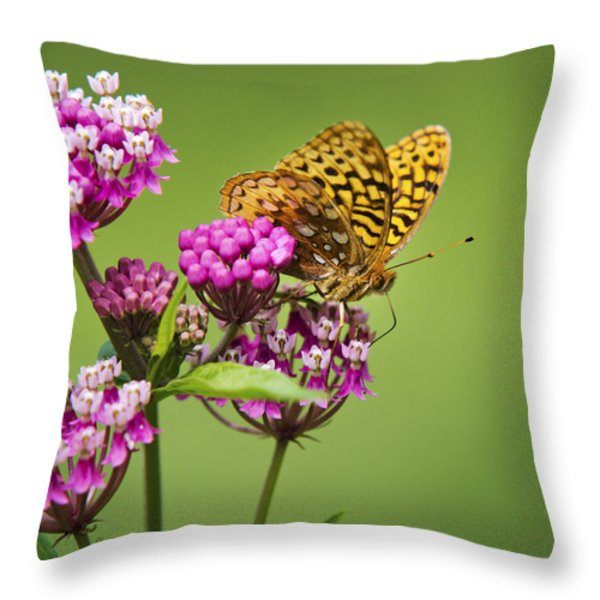 Fritillary Butterfly Square Format Throw Pillow by Christina Rollo