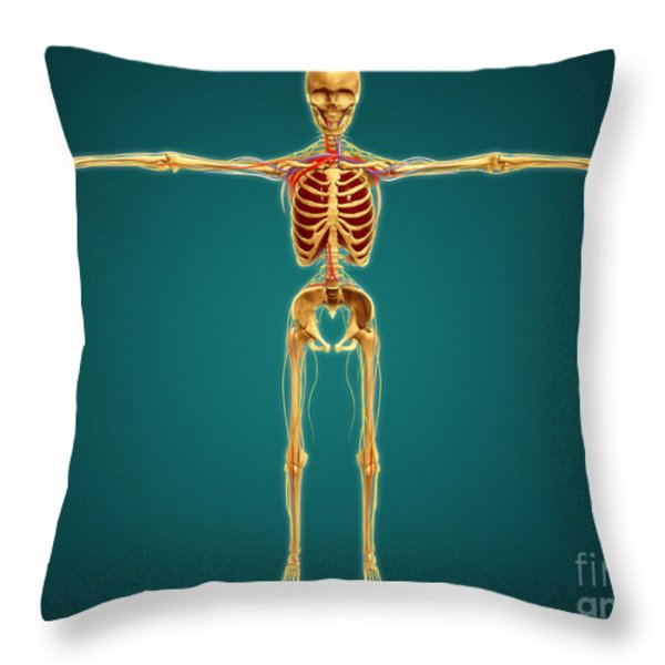 Front View Of Human Skeleton Throw Pillow by Stocktrek Images