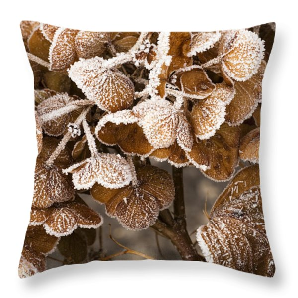 Frosted Hydrangea Throw Pillow by Anne Gilbert