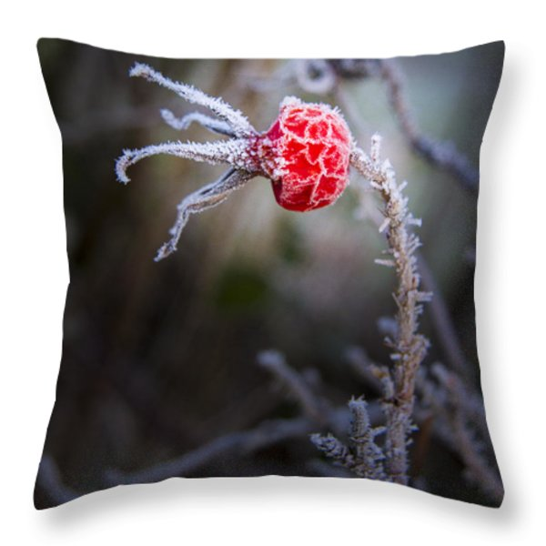 Frosted Throw Pillow by Jean Noren