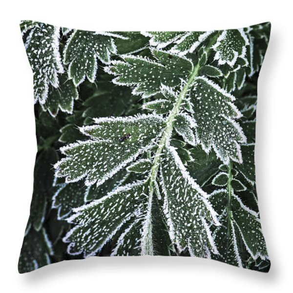 Frosty leaves macro Throw Pillow by Elena Elisseeva