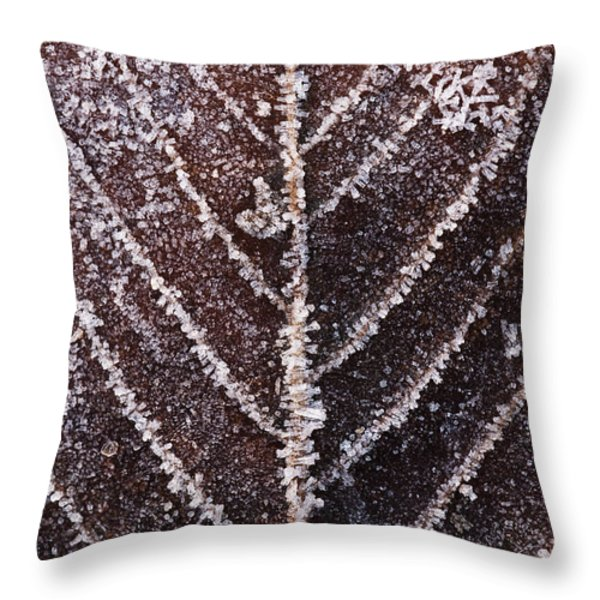 Frozen Leaf Throw Pillow by Anne Gilbert