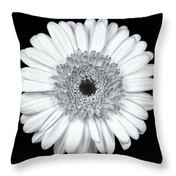 Gerbera Daisy Monochrome Throw Pillow by Adam Romanowicz