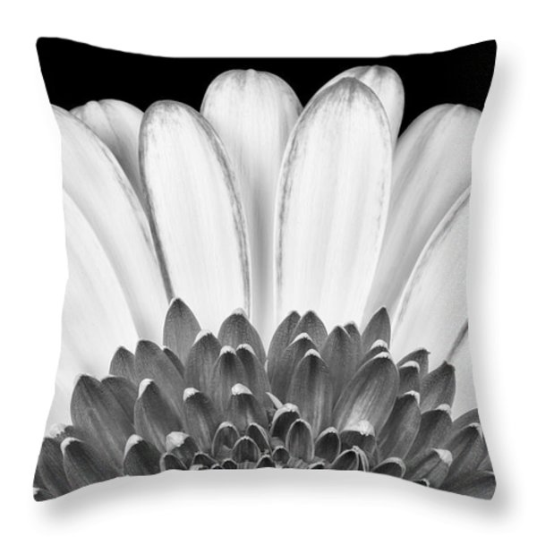 Gerbera Rising Throw Pillow by Adam Romanowicz