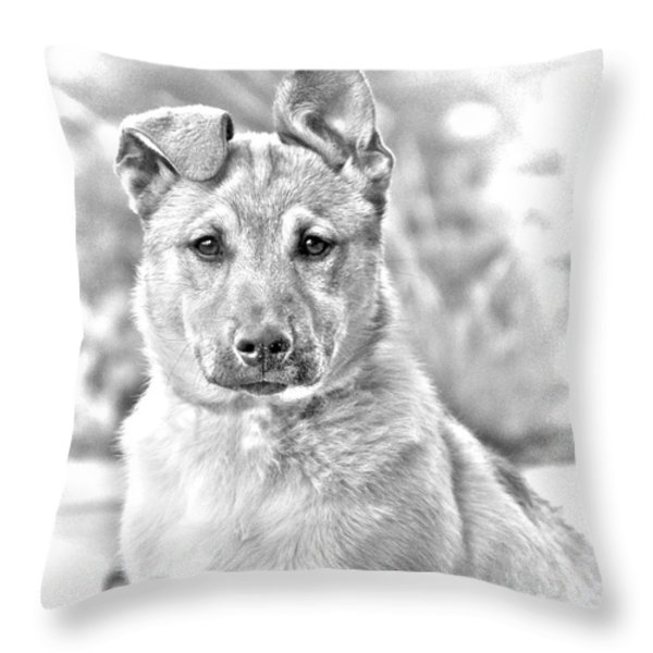 German Shepard Puppy Throw Pillow by James BO  Insogna
