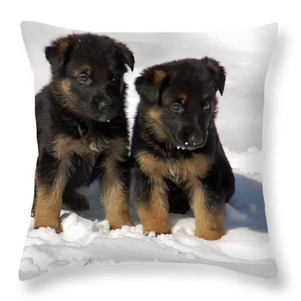 German Shepherd pups Throw Pillow by Aimee L Maher Photography and Art