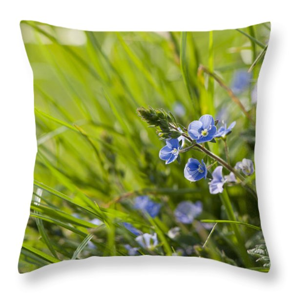 Germander Speedwell Throw Pillow by Anne Gilbert