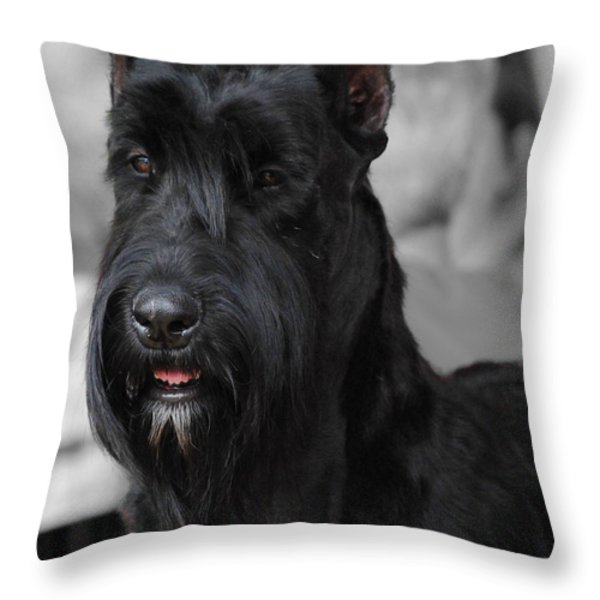 Giant Schnauzer Throw Pillow by Jai Johnson
