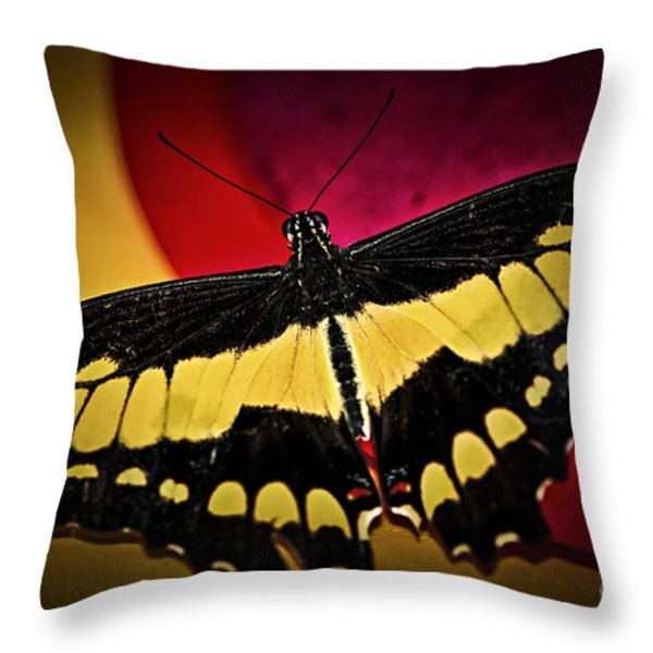 Giant Swallowtail Butterfly Throw Pillow by Elena Elisseeva
