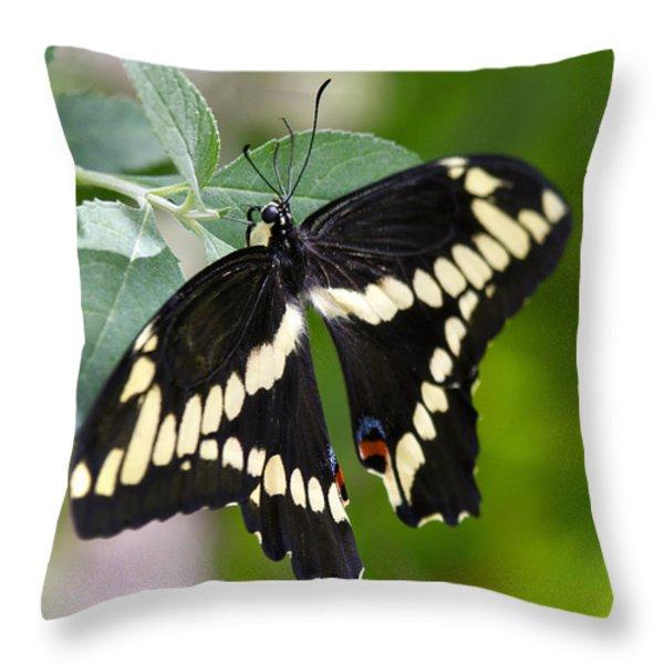 Giant Swallowtail Butterfly Throw Pillow by Saija  Lehtonen