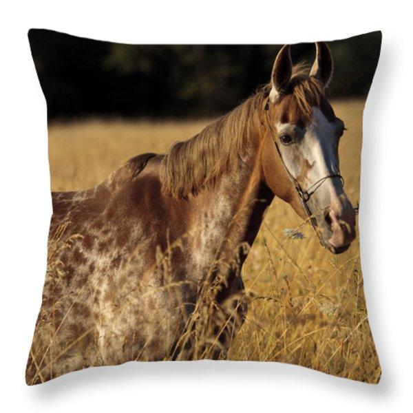 Giraffe Horse D7330 Throw Pillow by Wes and Dotty Weber