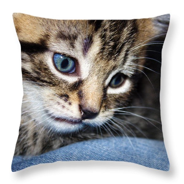 Gizmo Feeling Blue Throw Pillow by Terri  Waters