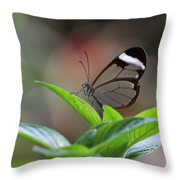 Glasswing Butterfly Throw Pillow by Juergen Roth