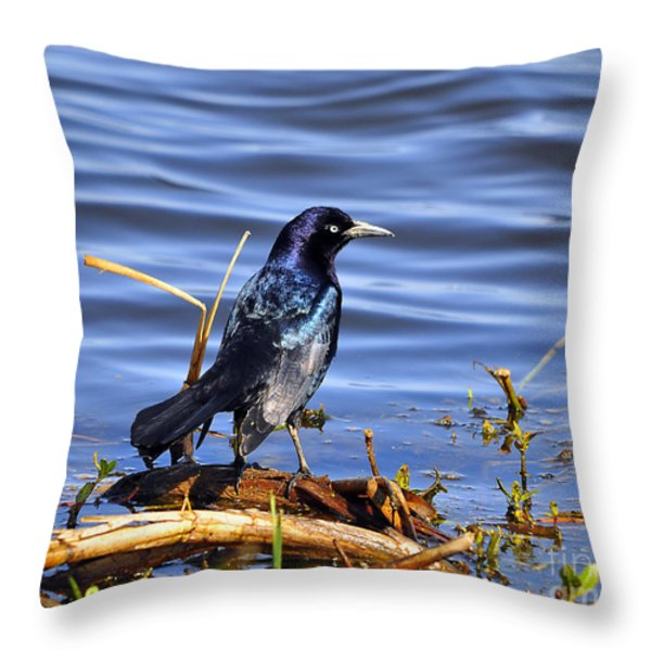 Glorious Grackle Throw Pillow by Al Powell Photography USA