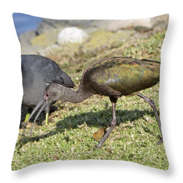 Glossy Ibis Throw Pillow by Shoal Hollingsworth