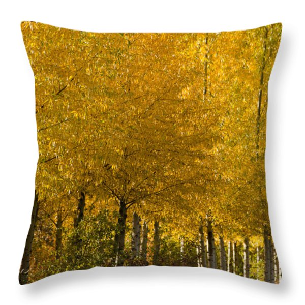 Golden Aspens Throw Pillow by Don Schwartz