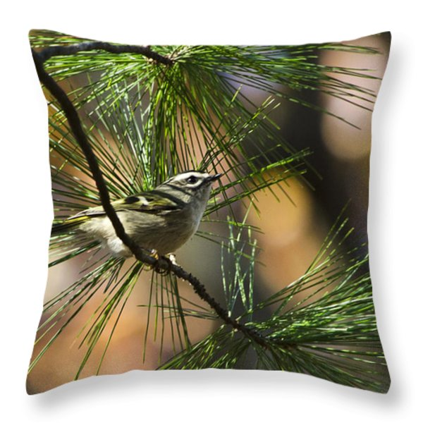 Golden-Crowned Kinglet Throw Pillow by Christina Rollo