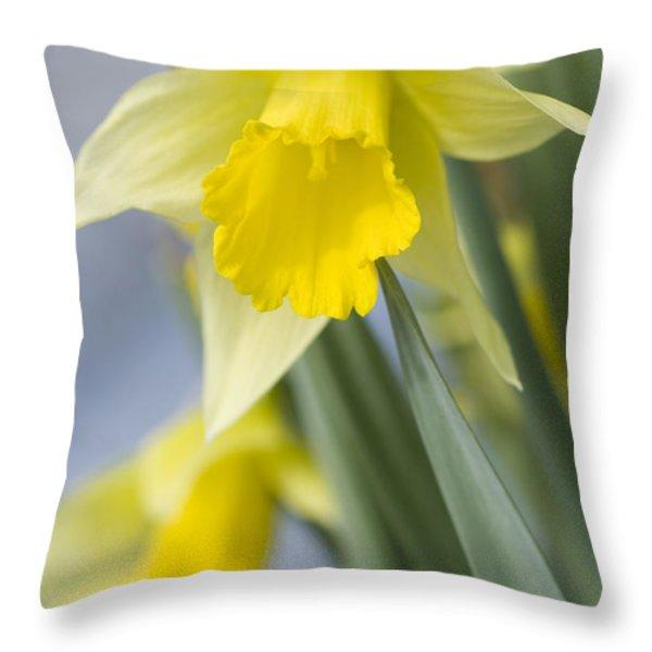 Golden Daffodils Throw Pillow by Anne Gilbert