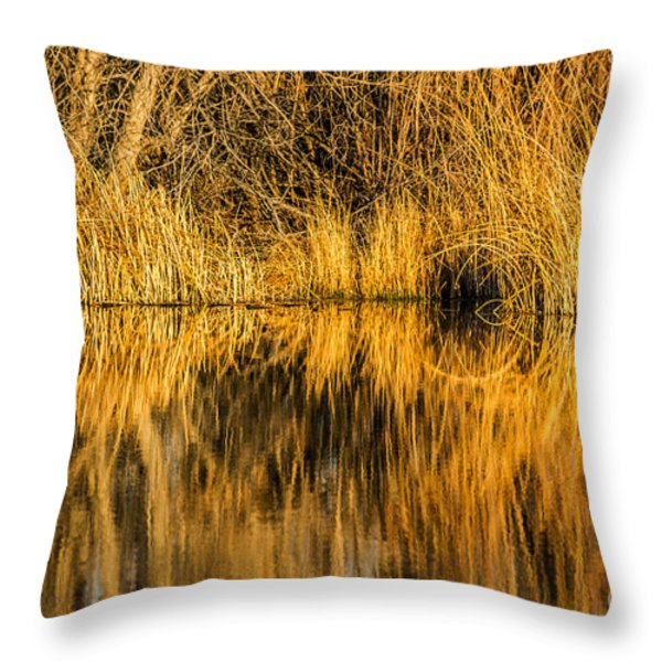 Golden Reflections Throw Pillow by Sue Smith