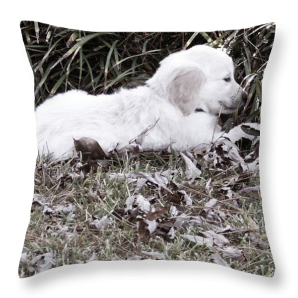 Golden Retriever Puppy 2 Throw Pillow by Andrea Anderegg