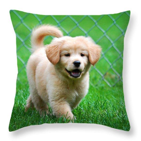 Golden Retriever Puppy Throw Pillow by Christina Rollo
