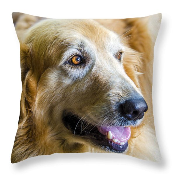 Golden Retriever Smile Throw Pillow by Carolyn Marshall