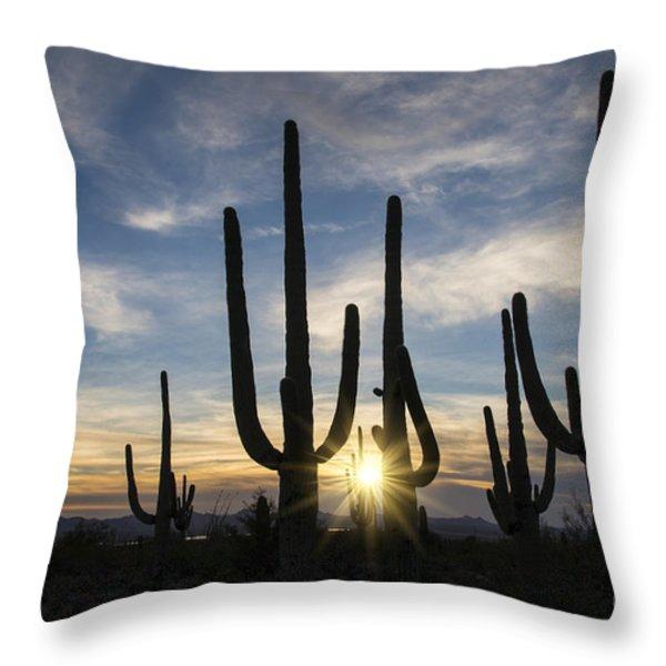 Golden Sunset - Saguaro National Park Throw Pillow by Sandra Bronstein