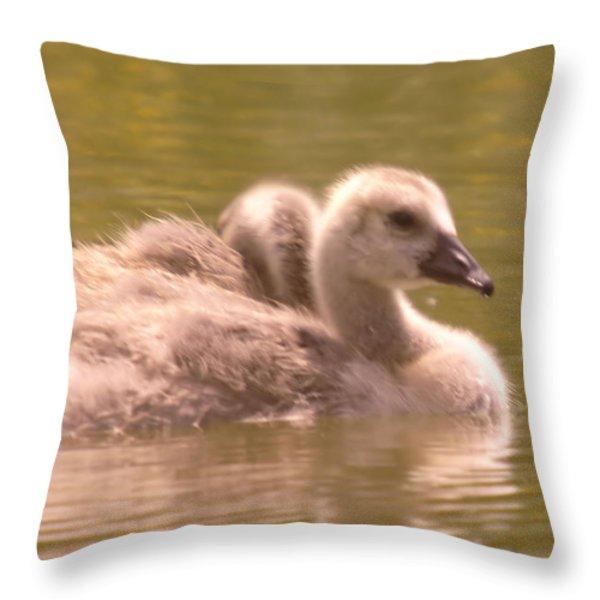 Goslings Throw Pillow by Jeff Swan