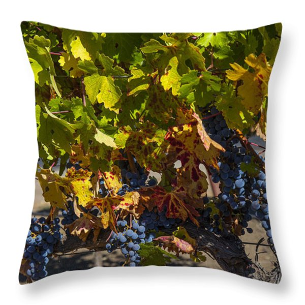 Grape Harvest Throw Pillow by Garry Gay