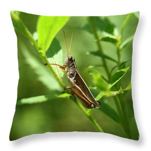 Grasshopper Climb Throw Pillow by Neal  Eslinger