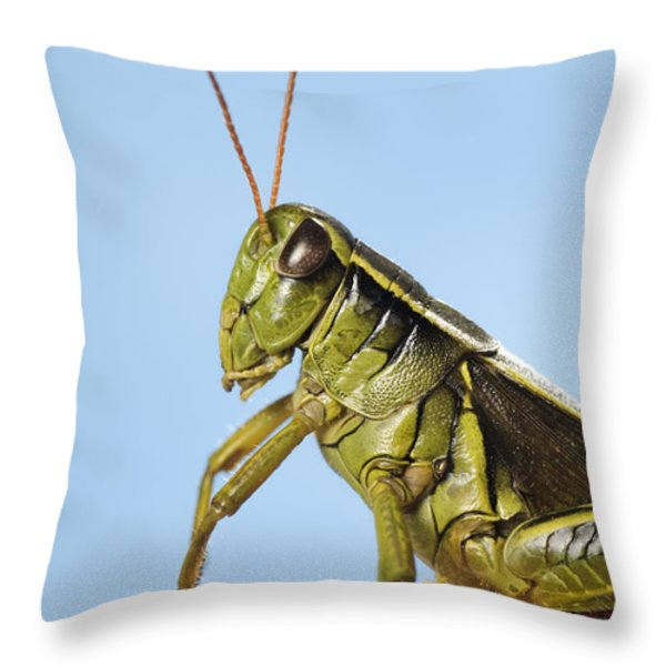 Grasshopper Close-up Throw Pillow by Thomas Kitchin & Victoria Hurst