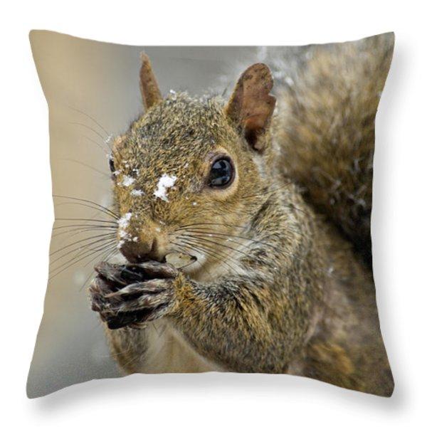 Gray Squirrel - D008392 Throw Pillow by Daniel Dempster