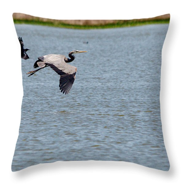 Great Blue Chased By A Grackle Throw Pillow by Roy Williams