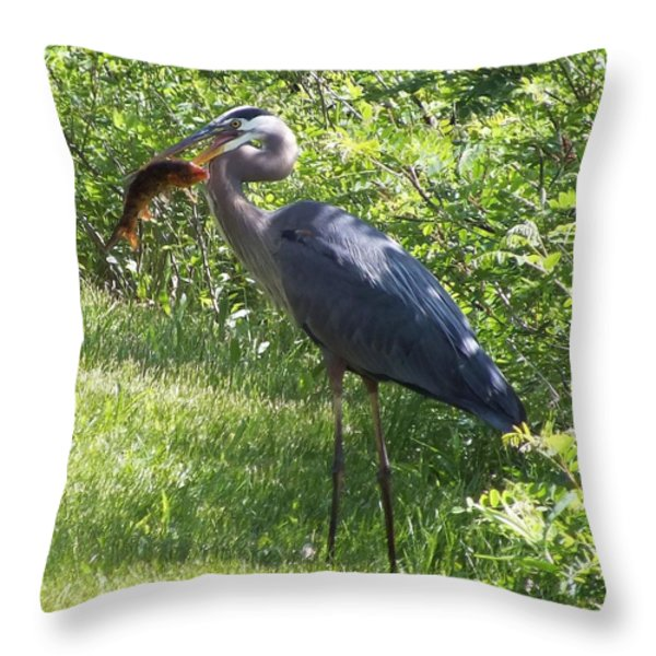 Great Blue Heron Grabs A Meal Throw Pillow by Christina Shaskus