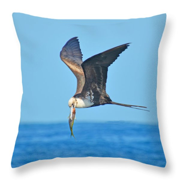 Great Frigate Bird Throw Pillow by Chris Thaxter