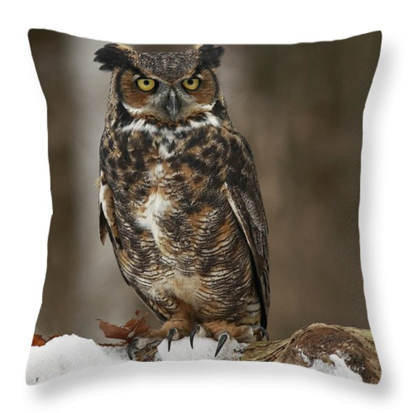 Great Horned Owl Watching You Throw Pillow by Inspired Nature Photography By Shelley Myke